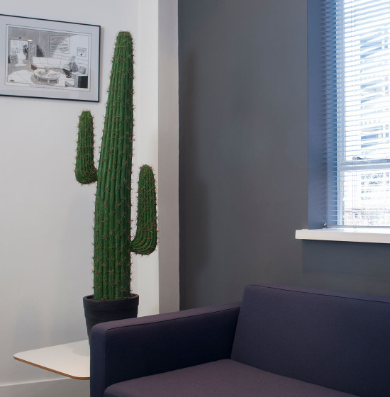 artificial cactus plants uk garden design ideas. Black Bedroom Furniture Sets. Home Design Ideas