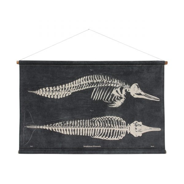 Dolphin Skeleton Wall Chart
