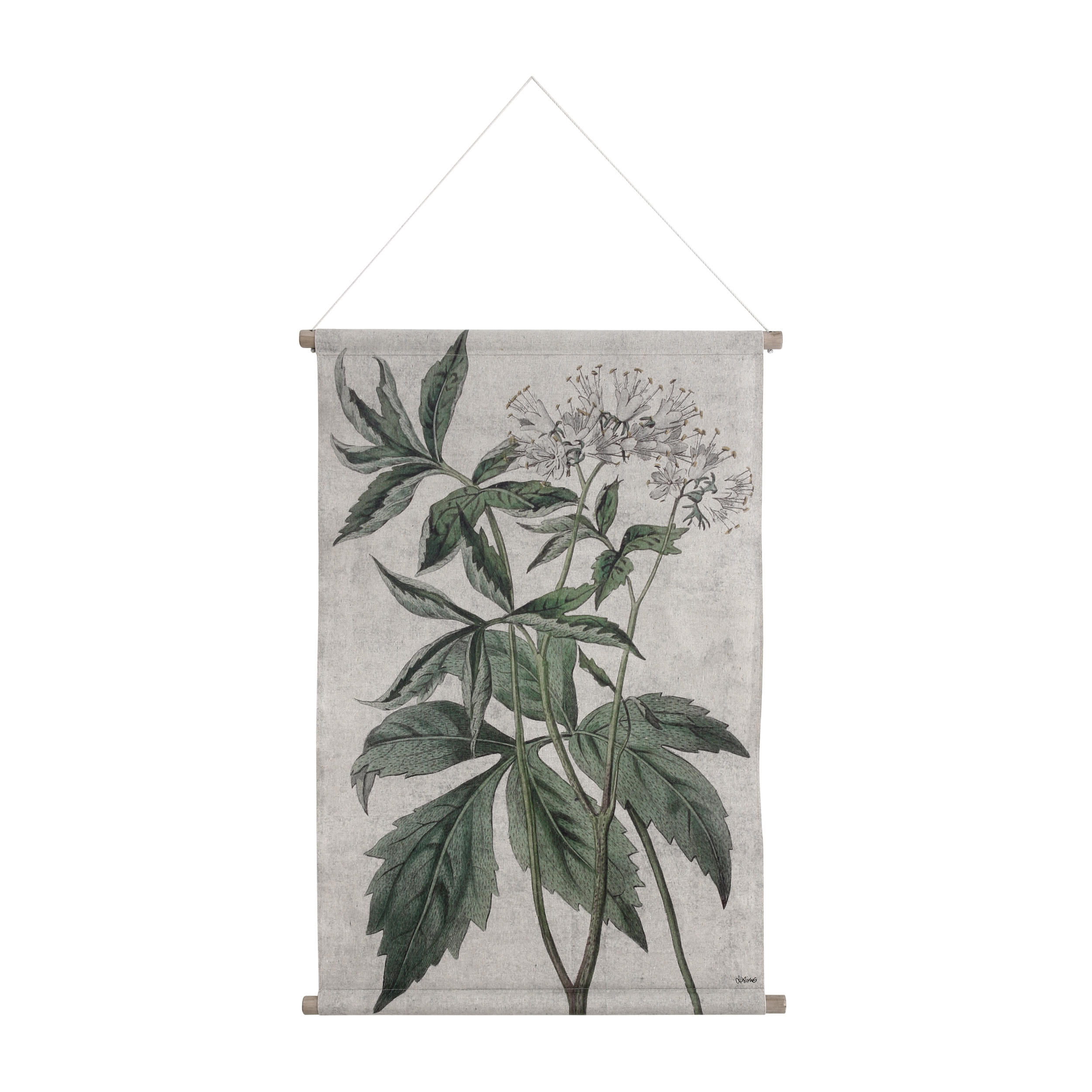 botanical wall chart l love frankie. Black Bedroom Furniture Sets. Home Design Ideas