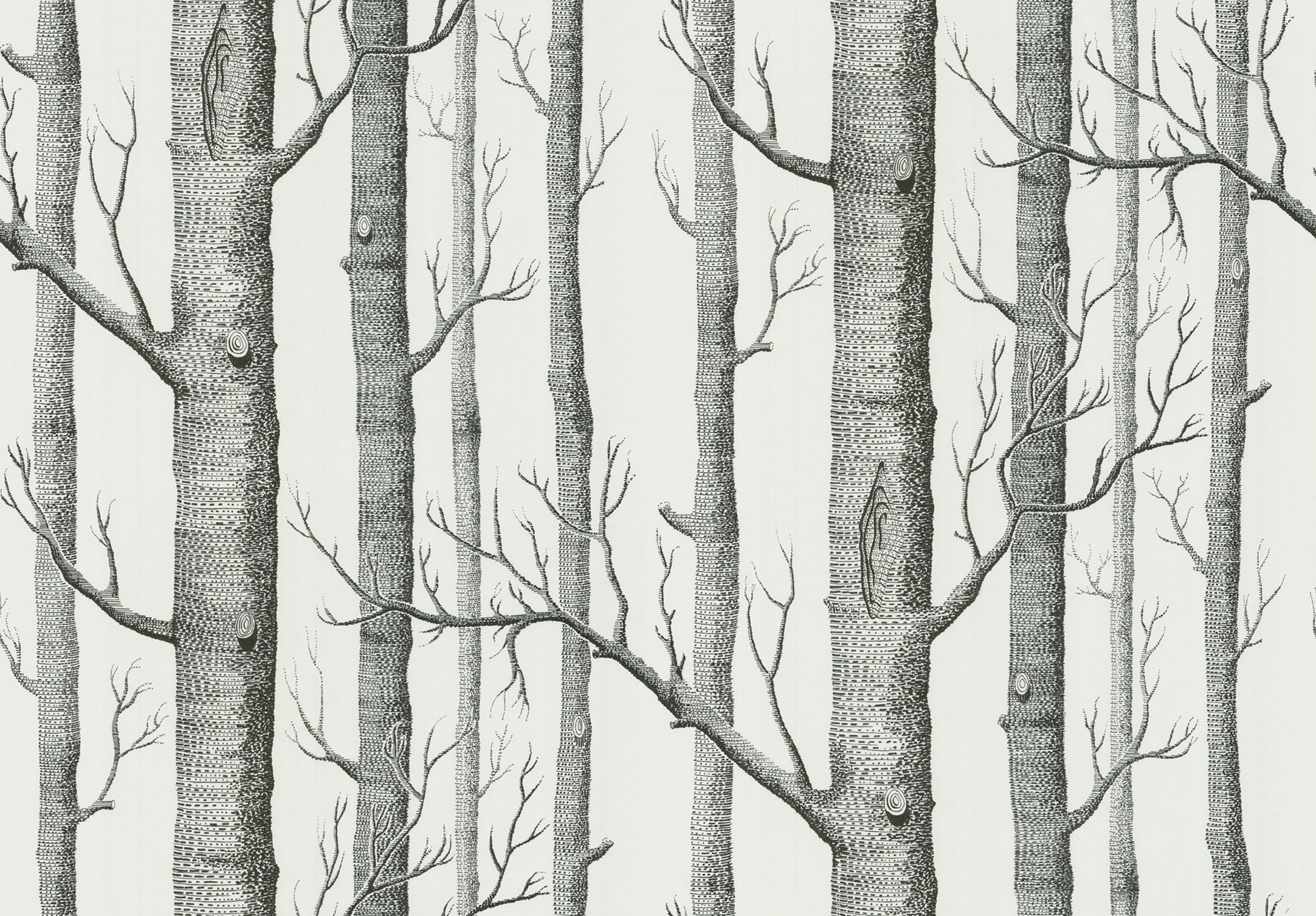 Cole Son New Contemporary The Woods Wallpaper 5 Colours Available