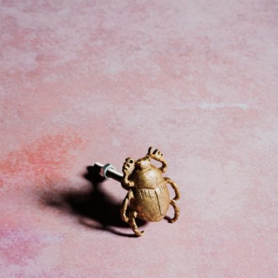 Beetle Drawer Knob In Gold Life Style
