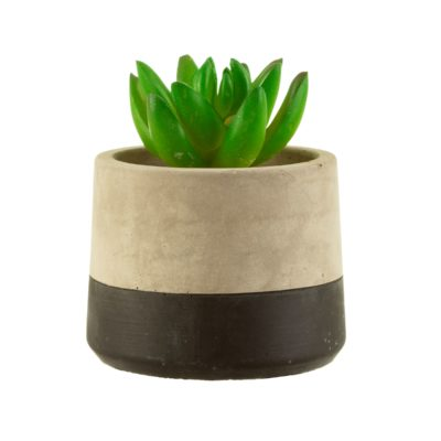 Mini Black Dipped Effect Concrete Planter With Plant Cut Out White Background