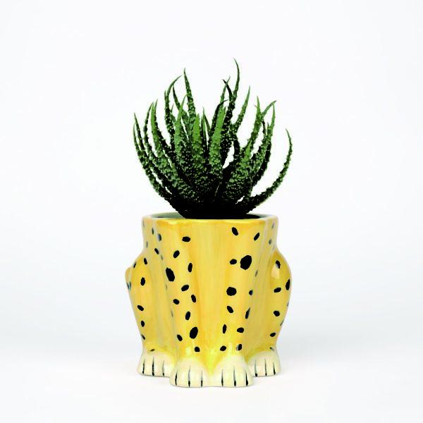 Cheeky Cheetah Plant Pot with Cactus