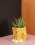 Cheeky Cheetah Plant Pot