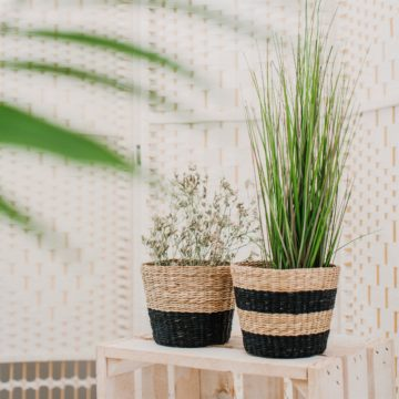Seagrass Planter Life Style
