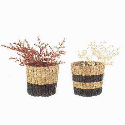 Mini Seagrass Planters With Plants Cut Out White Background