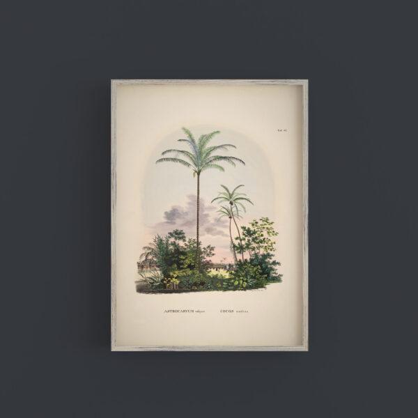 love-frankie-exotic-coconut-palm-tree