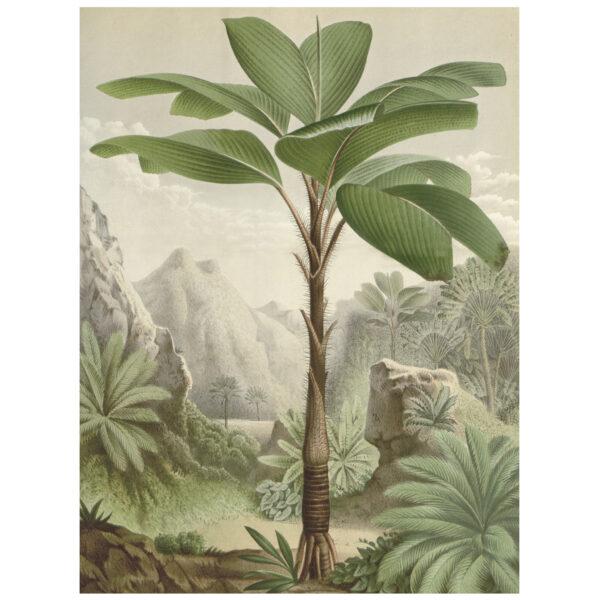 love-frankie-seychelles-palm-canvas-wall-chart